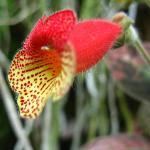 Un fiore del giardino
