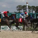 Tampa Bay Downs Finish Line Up Close