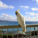 Cockatoo on our balcony and the amazing ocean view