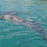 dolphin reef, 10 minutes walk from hotel