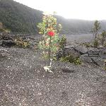 Along Kilauea Iki Trail