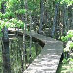 A boardwalk into the marsh