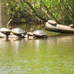 Pee Dee National Wildlife Refuge