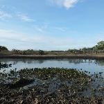 Lago com Aguapé