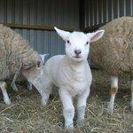Newbarn Farm