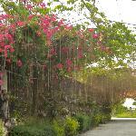 Photo of Laam Yha Garden Resort