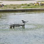 bird enjoying the pool
