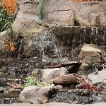 indoor courtyard - waterfall