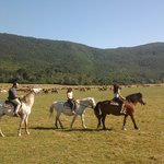 la vallata con 500 cavalli e 400 mucche