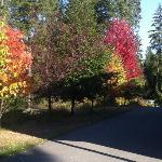 Fall color (1)