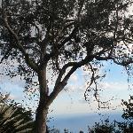 un des arbres du jardin