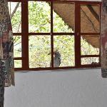 Freundlicher Weckdienst durch einen Yellow Horned-Hornbill