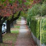 Blackheath street in autumn colour