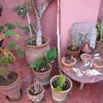 Plants on the terrace