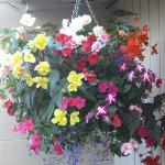 Hanging Baskets in small but well designed garden