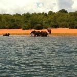 Elephants splashing in the lake below the hotel, taken from fishing boat