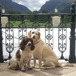 Dog Friendly - The Dunloe