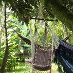 Community of hammocks