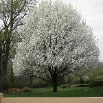 Gorgeous tree on our walk