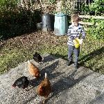 All the kids get a chance to feed to chickens and collect eggs for breakfast