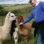 Even Ian was Alpaca friendly!