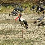 Parc Pendjari Bénin, oiseaux