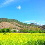 Blossoming Canola flower field. Very serene place, just 2-3 min walking from Bruce Chalet