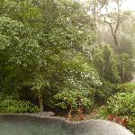 pool at the edge of rain forest