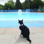 View of Pool with Lido Cat!