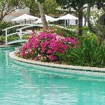 Beautiful landscaping around pool.