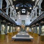 The Hunterian -- Cathedral of Science