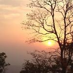 la forêt indienne