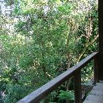 View from the Balcony... Jungle!