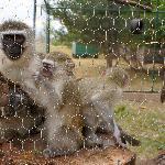 monkey shelter