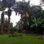 An oasis in Kampala! Beautiful backyard!