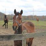 Dunham Sport Horses