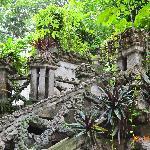amazonic plants