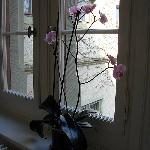 Orchid in Hallway