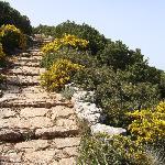 Spring Mediterranean vegetation