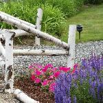 Birch fence & flowers around the Lodge