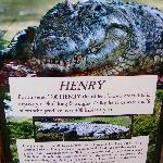 Henry the oldest crocodile in captivity