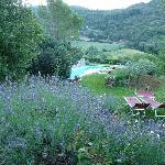 Pool mit Lavendel