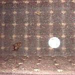 dead roaches under vanity