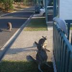 Wildlife at the cabin door!