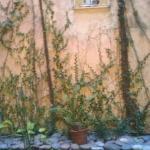 Another courtyard garden