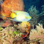 Corais preservados e um lindo CIliares