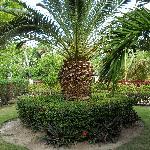 les superbes plantes