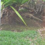 mongoose outside of bedroom patio