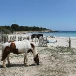 Horses in the local Park/Beach