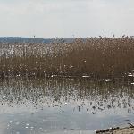 Blick aus Strandkorb auf See